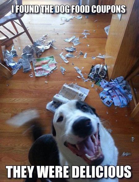 border collie meme naughty dog