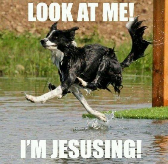 border collie running dog meme