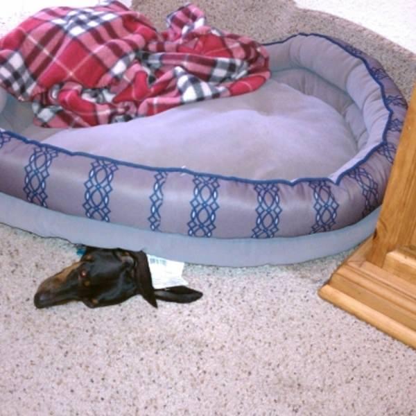 dog funny sleeping dog
