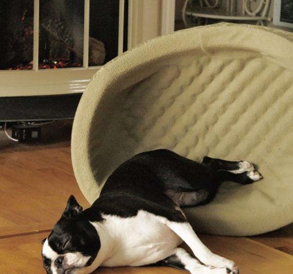dog rest sleep