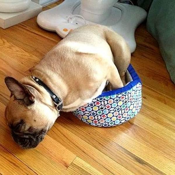 dog sleep time humor