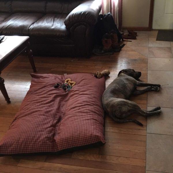 dog sleeping pet