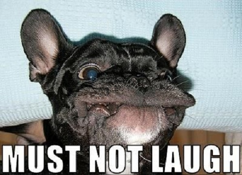 french bulldog face meme