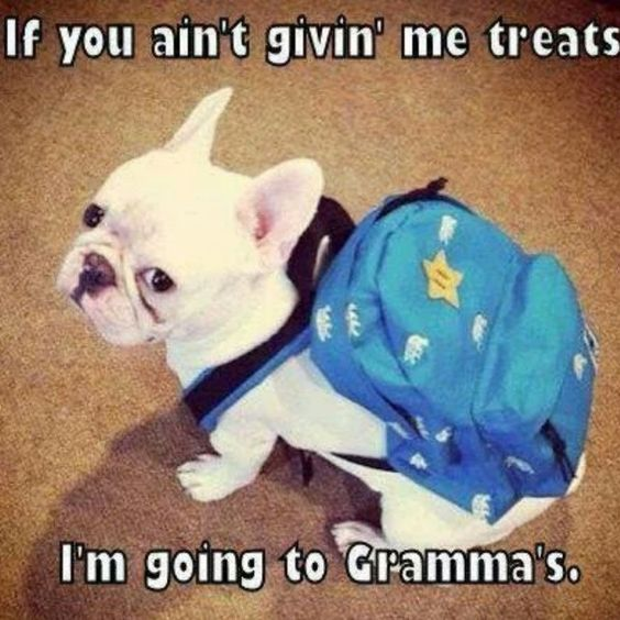 french bulldog meme funny