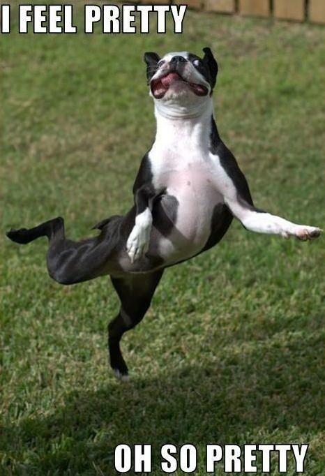 happy boston terrier