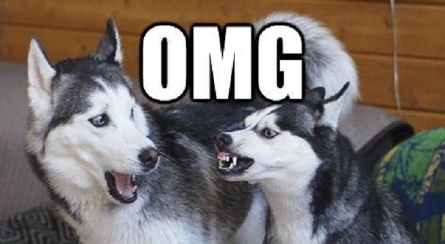 Meme Funny Husky Dogs : 14 best husky memes of all time