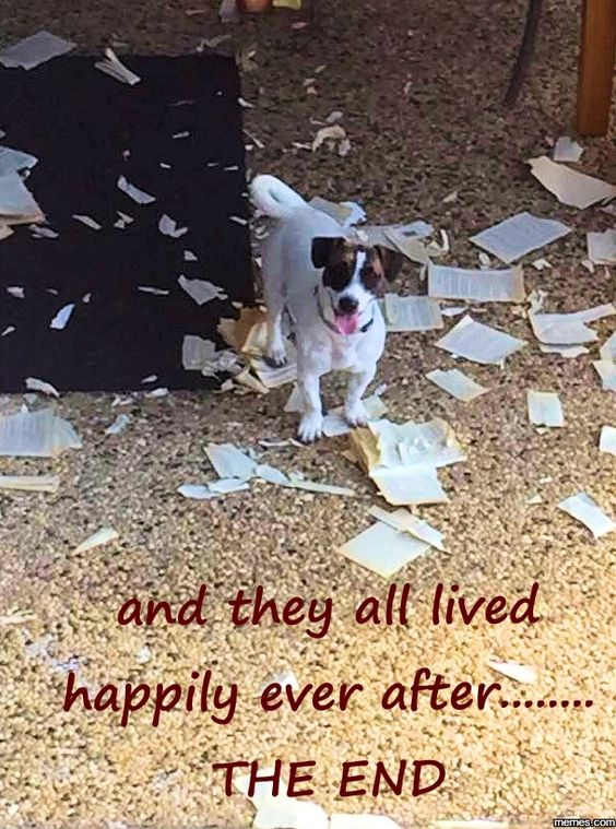 jack russell happy meme