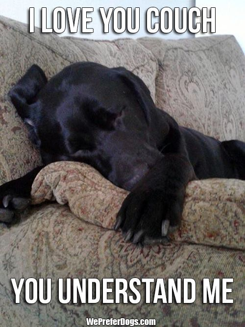 Best Dog Food For Labs >> 12 Best Labrador Memes of All Time