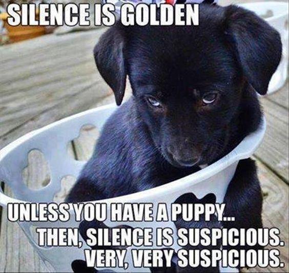 labrador silence dog puppy meme