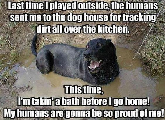 mud bath labrador meme