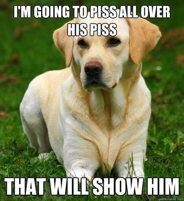 thing meme labrador