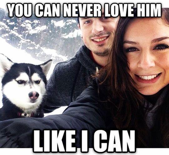 upset husky meme
