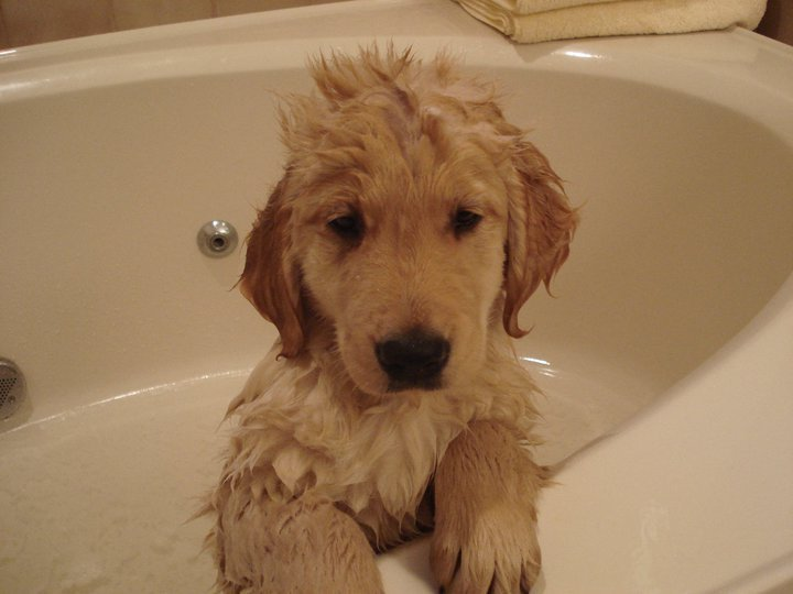 12 Puppies Who Just Had Their First Bath