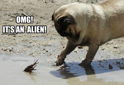 alien pug meme