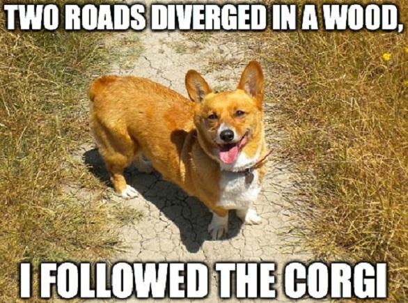 corgi meme dog