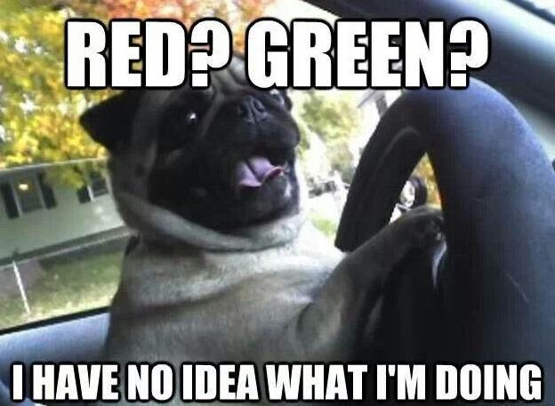 funny pug meme drive