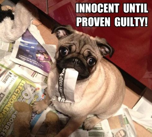 innocent pug meme
