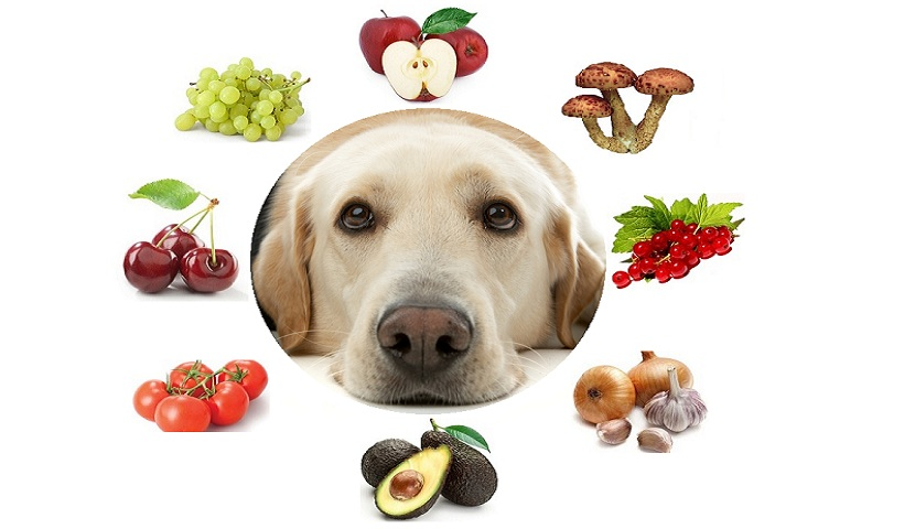 7 Tips for Selecting Exactly the Right Food for Your Dog 22