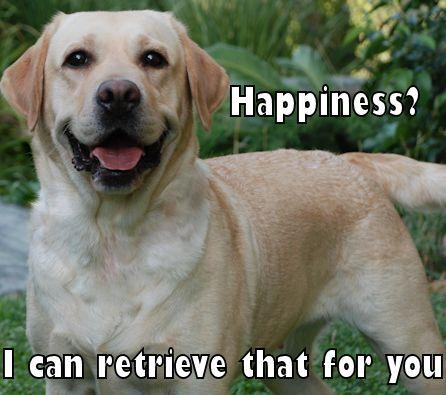 labrador retriever meme happiness