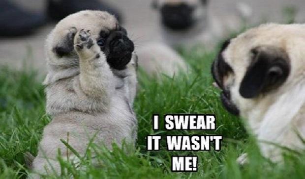 12 funniest pug memes and comics