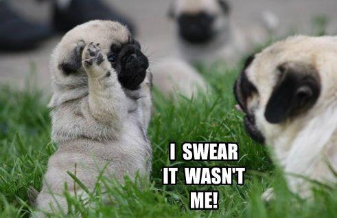 pug meme swear funny