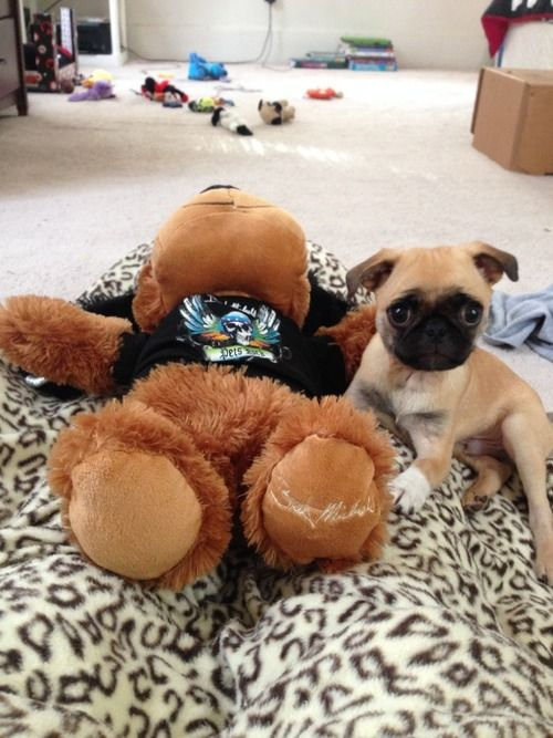 pug puppy toys