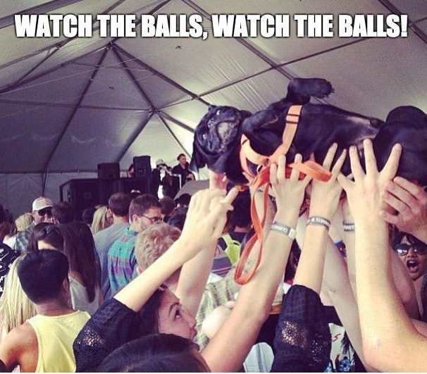watch the ball pug meme