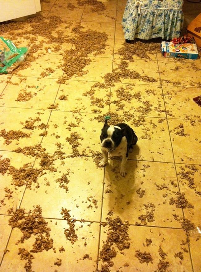 cute funny dog mess pics