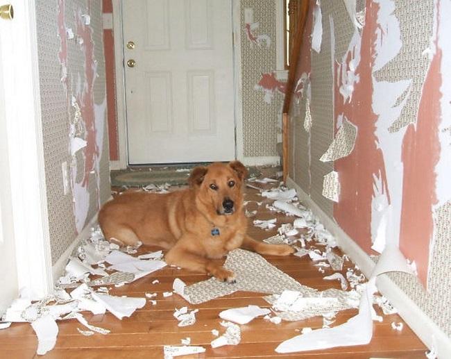 dog mess home papers door
