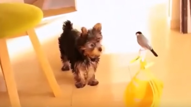 This Yorkshire Terrier Became Best Friends With A Bird