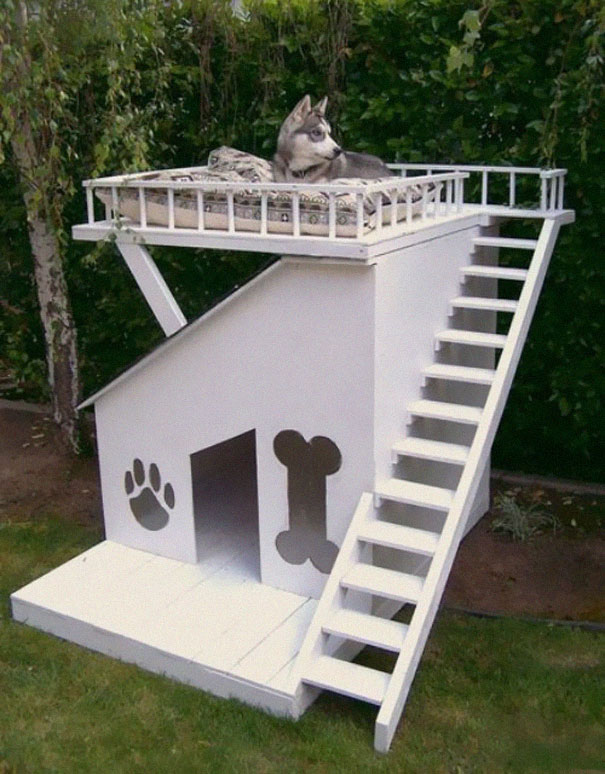 Dog House Fort husky