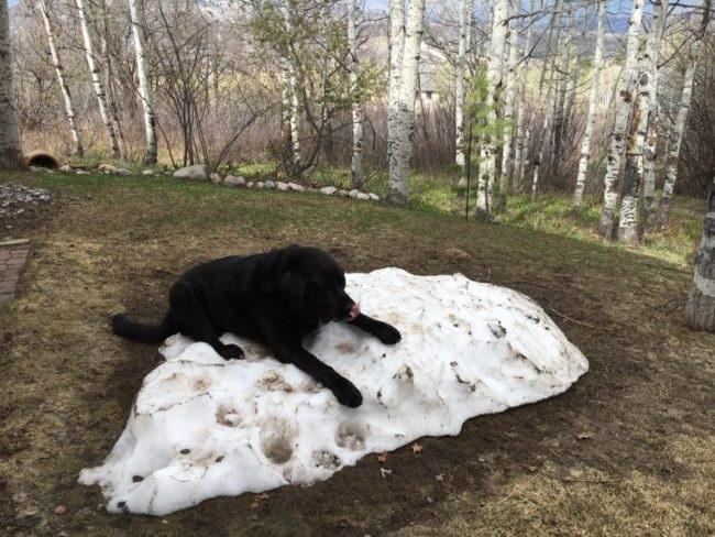 cute black labrador retriever