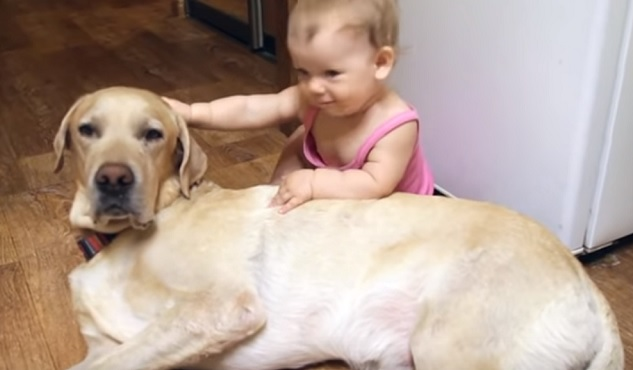 Tips To Getting The Perfect Dog For Your Children 6