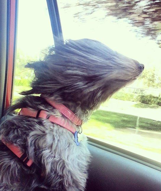 wind dog car