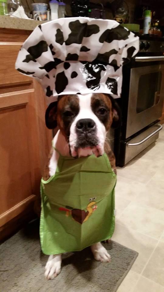 chef-boxer-dog-boxer