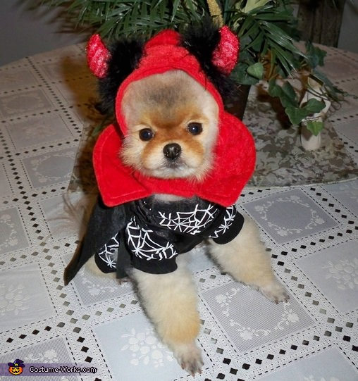 devil-pomeranian-halloween-costume