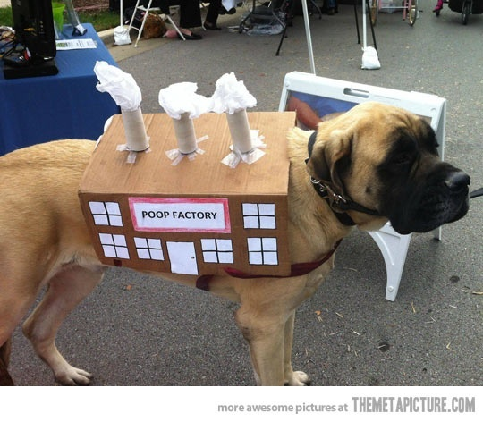dog-halloween-costumes-mastiff