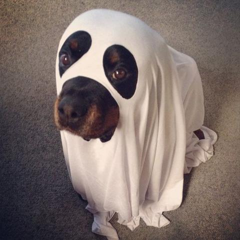 ghost-rottweiler-costume