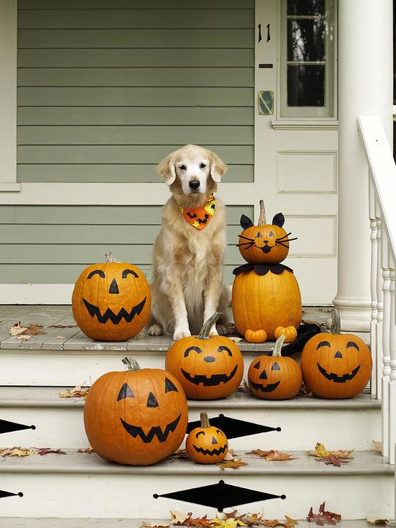 golden-retriever-halloween-pumpkins