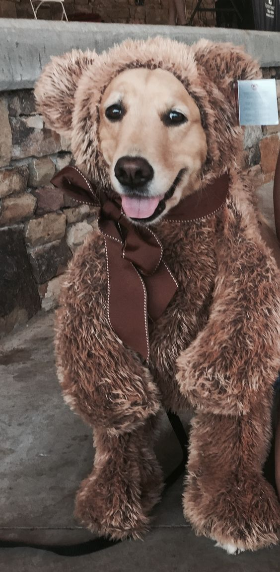 golden-retriever-halloween-costume