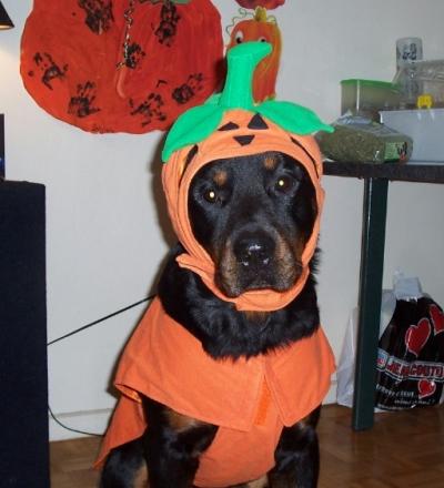 Rottweiler Costumes Halloween