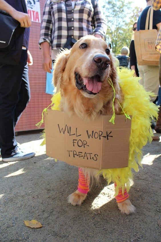 halloween-golden-retriever