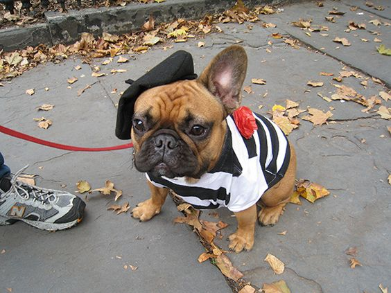 happy-halloween-french-bulldog