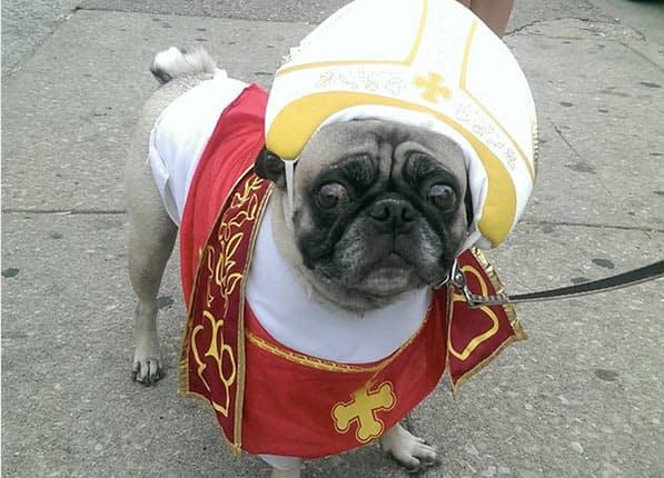 pope-pug-costume