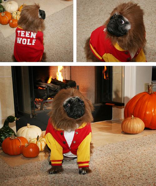 teen-wolf-pug-dog