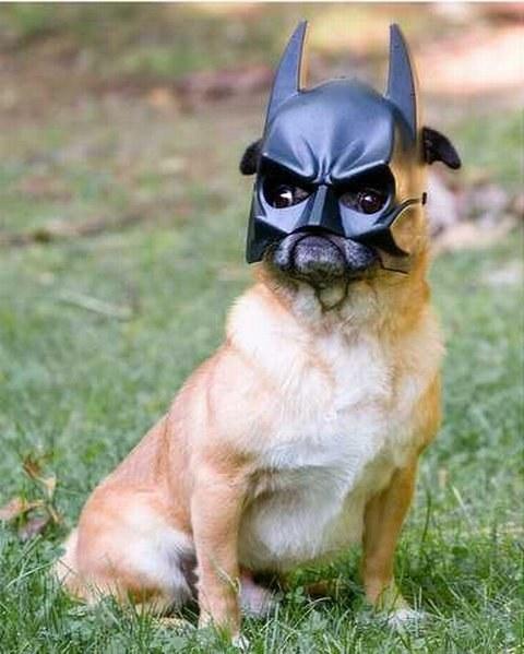 batman-pug-dog
