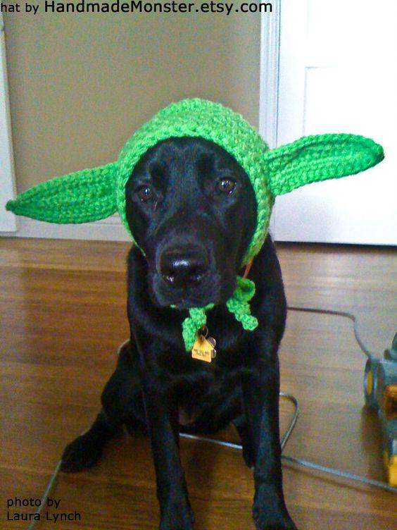 black-labrador-costume-yoda