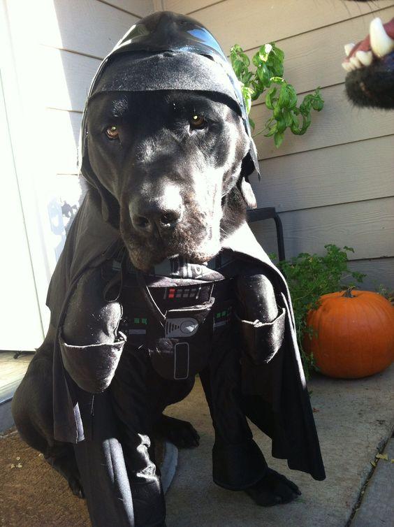 black-labrador-costume