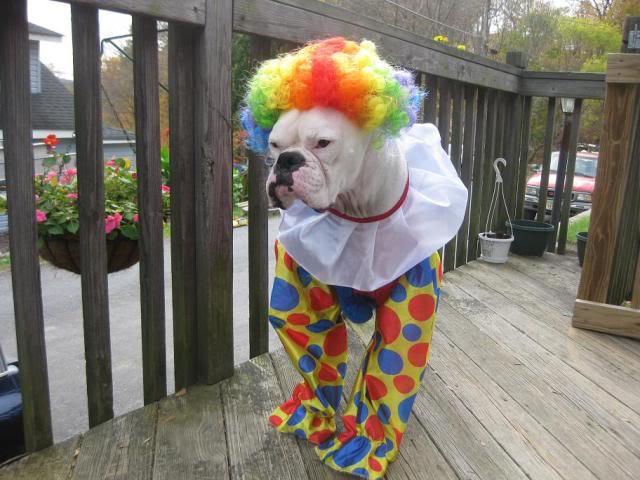 boxer-clown-halloween-costume