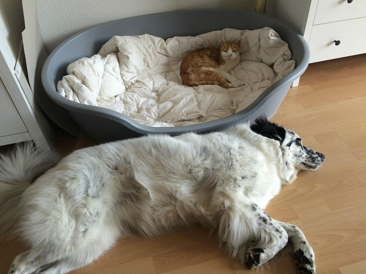 cat-and-dog-funny